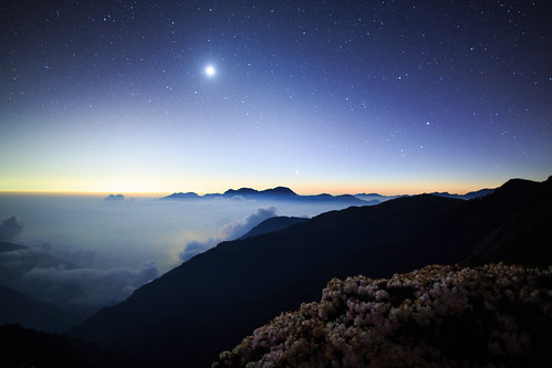 月夜鵑影 by samyaoo 山姆搖