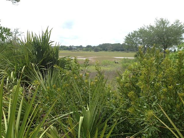 Typical marshland vegetation, Ripley Point