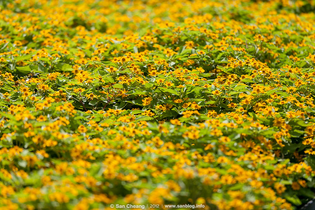flower_Tapseac-0206