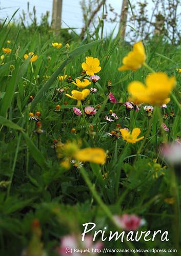 Primavera. Flores silvestres