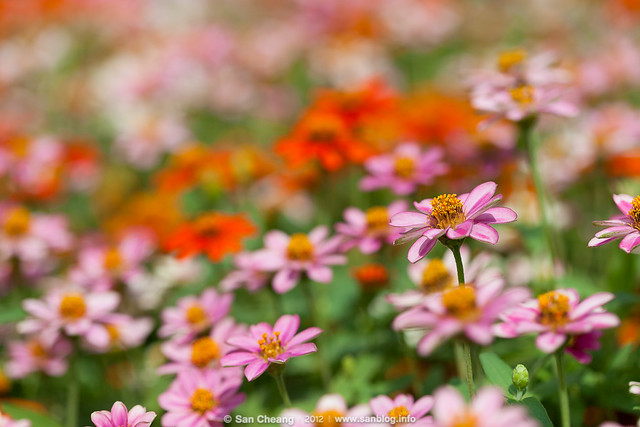 flower_Tapseac-0222