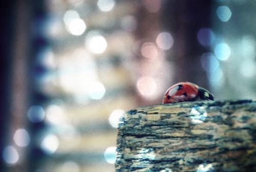 Ladybug by Art Gamila