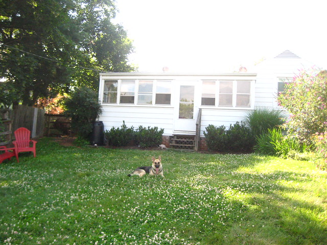 Yard and house and dog