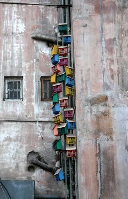   May 31   110 bird houses beirut