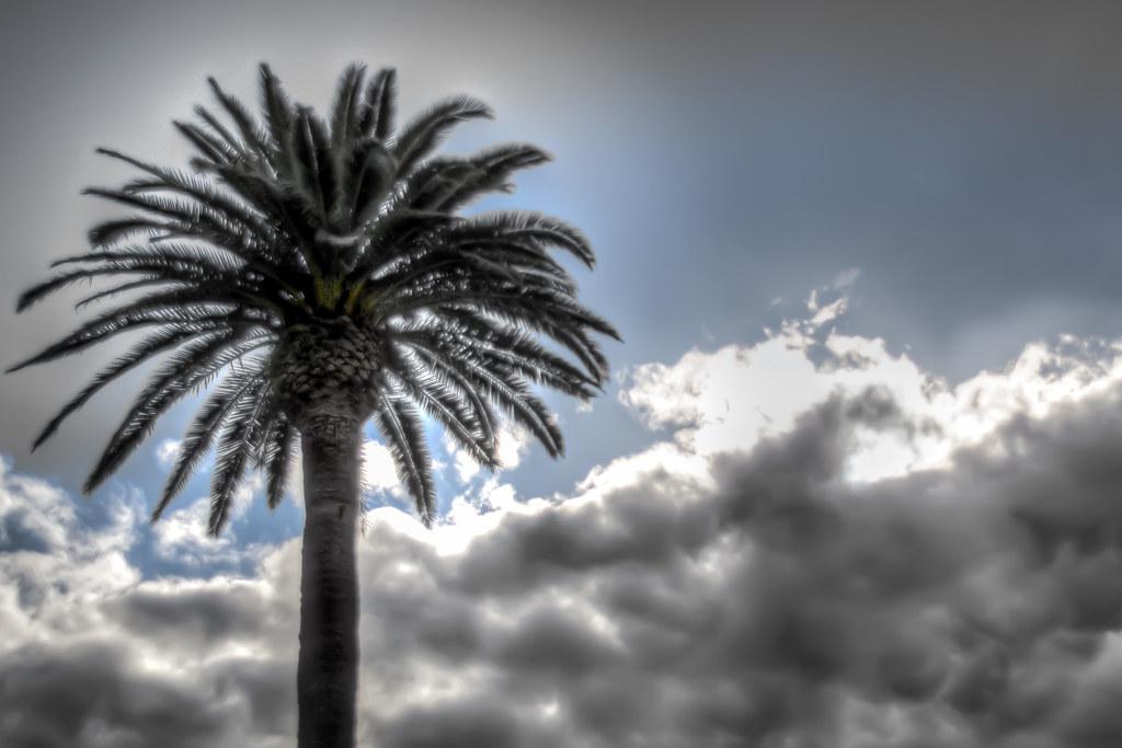 Napa Palm