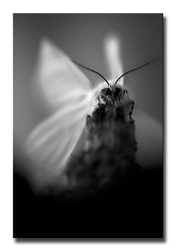 La naturaleza es la mejor muestra de la verdad (S. Agustín) by Bego Tamayo. Proyecto DUEÑAS