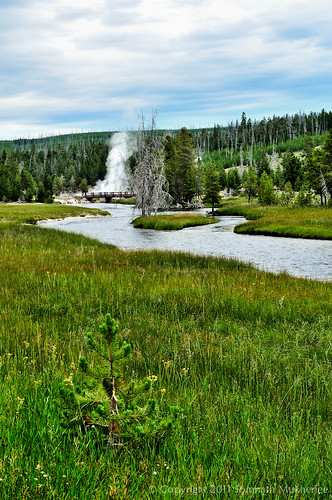 Near Morning Glory Pool, Upper Geyser Basin | Yellowstone National Park | July 2011 by Somnath Mukherjee Photoghaphy