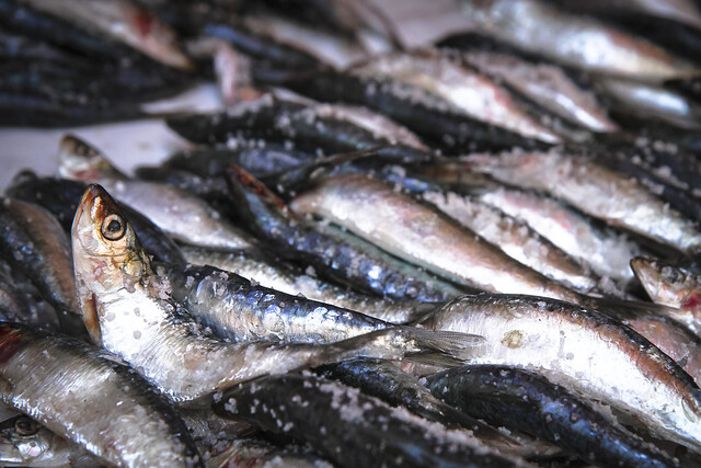 Essaouira fish Market, Morocco