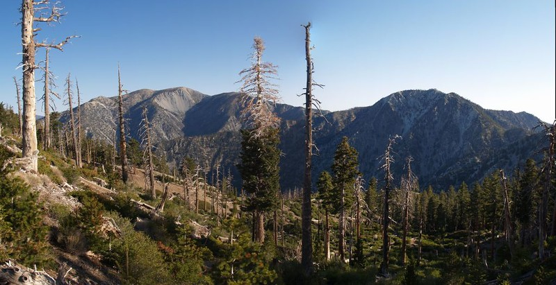 Mt Baldy and Telegraph Peak from the Bighorn Peak Trail