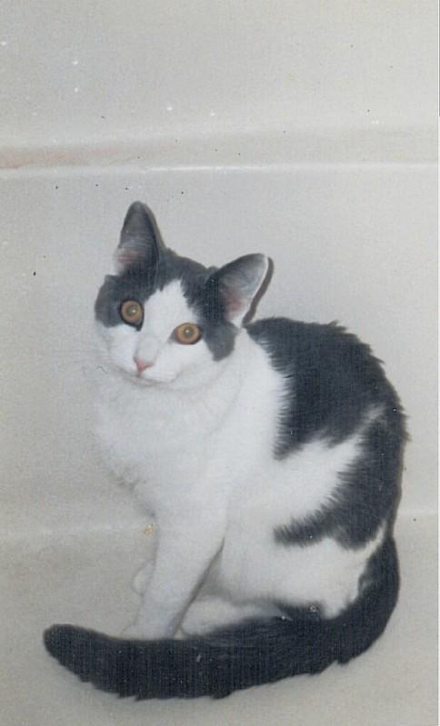 Aremid in bathtub (1996)