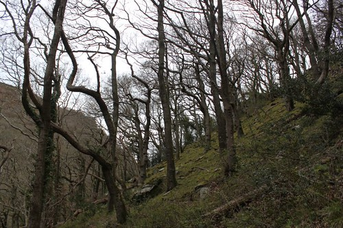 20120416_3981_Watersmeet-woodland-walk-trees