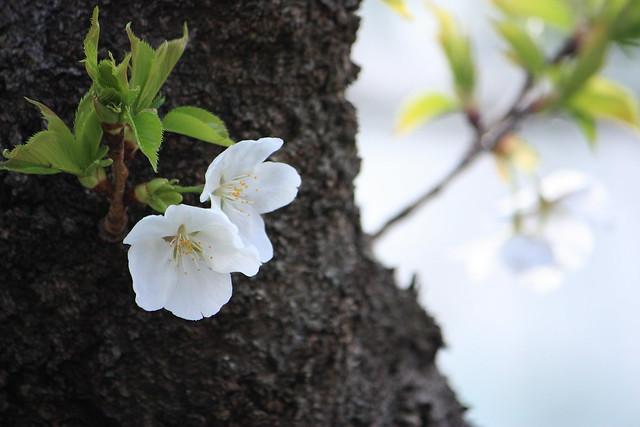 Spring Arrives! (2/6)