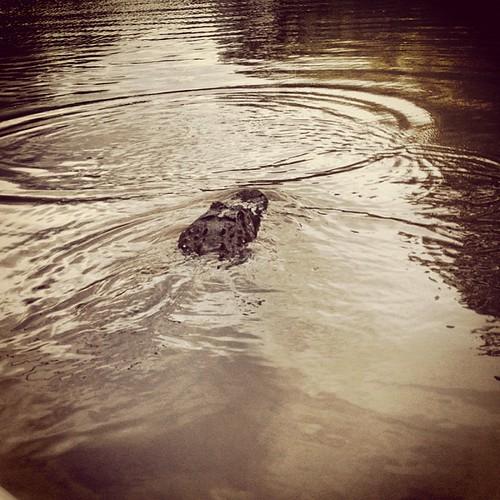 Later, alligator.