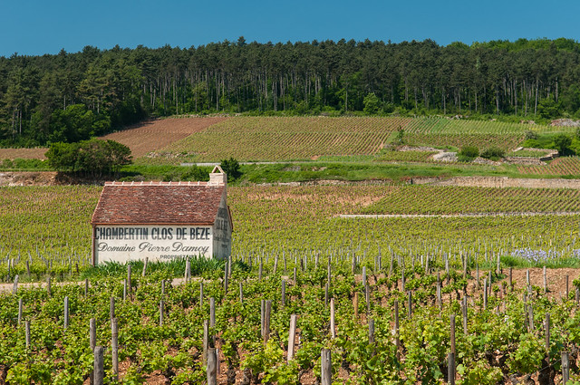 Driving through the Route des Grands Crus