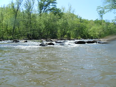 Tyger River Shoals