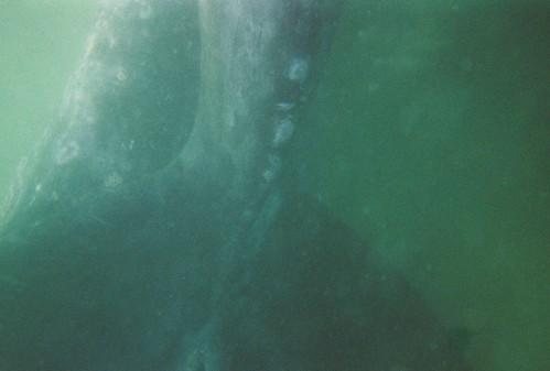 2008.LagunaSanIgnacio.Baja.8