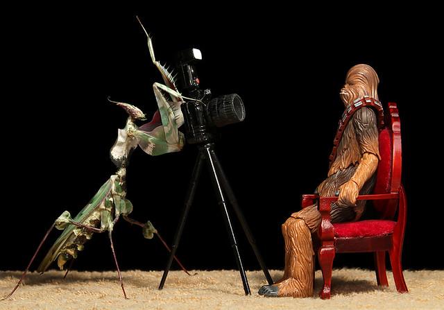 Idolomantis Takes Chewbacca's Portrait