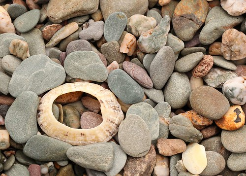 Stones and shell