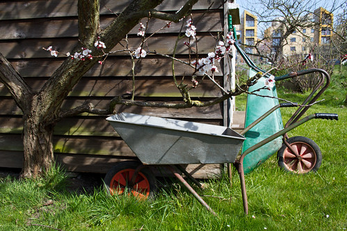 Spring on the allotment