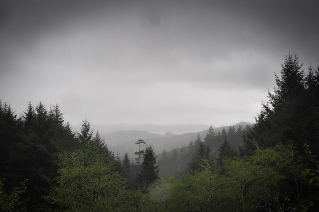 Rainclouds and treetops