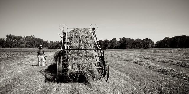 Making Hay 6