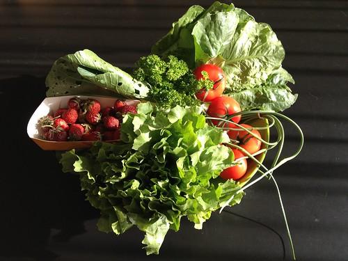 Amelishof organic CSA vegetables wk 24, 2012