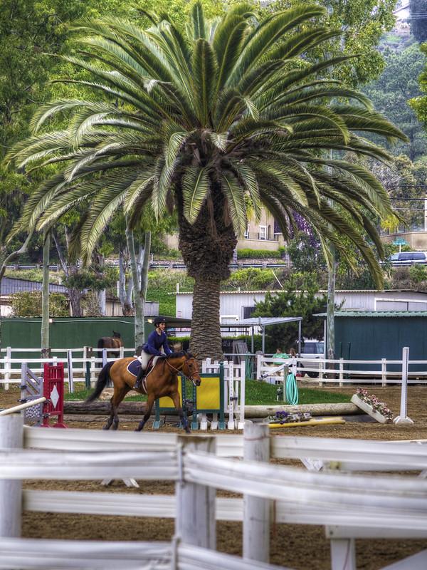 Palm Rider