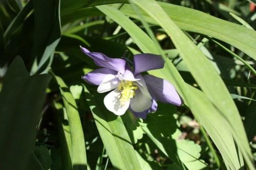 20120429_flowers_020