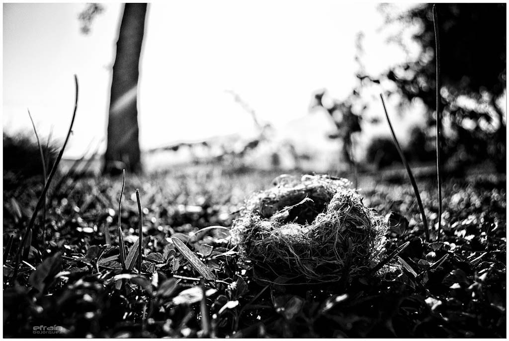 2012-04-04: Fallen