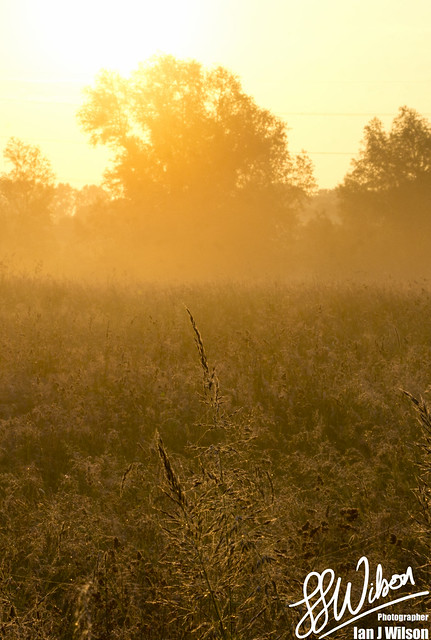 Grass in the Mist – Daily Photo (26th June 2012)