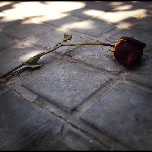 Las rosas, como la vida, tienen espinas... Pero si sabes esperar, la belleza, igual que el aprendizaje, es lo que puedes lograr que perdure a pesar del tiempo. by rutroncal