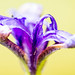 20120805-_DSC0134.jpg