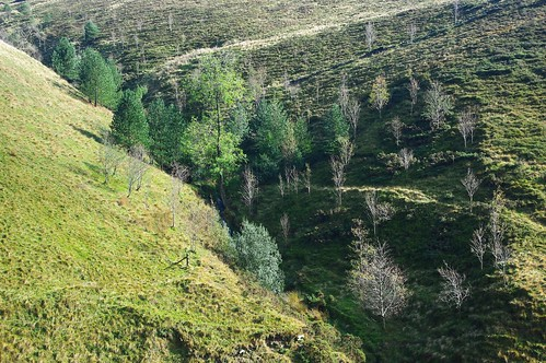 20111016-11_Trees in Clough - Southern Flanks of Kinder Scout by gary.hadden