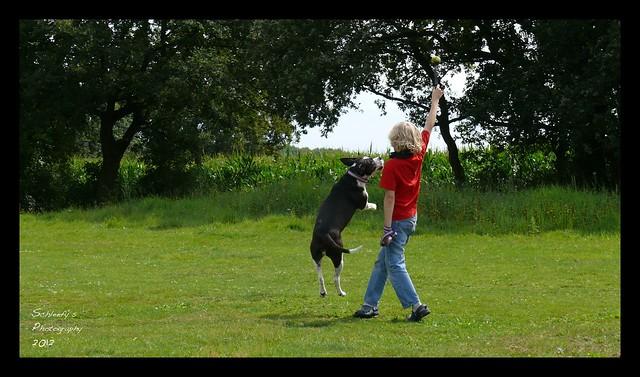 Dog Sport II