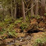 Purisma Creek Redwoods