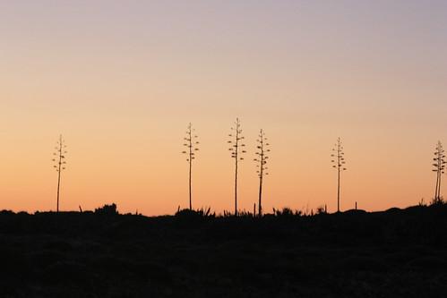 tree sunset by Rossella Sferlazzo