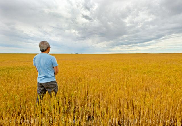 Ocean of Grain
