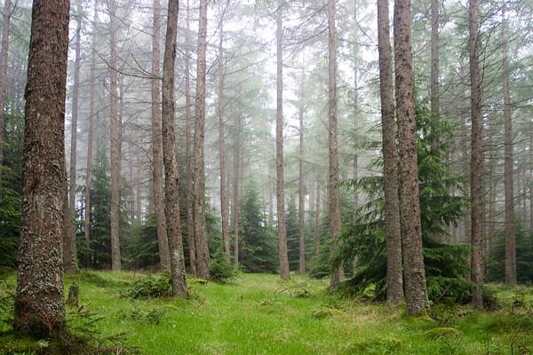 woods-in-mist-copy