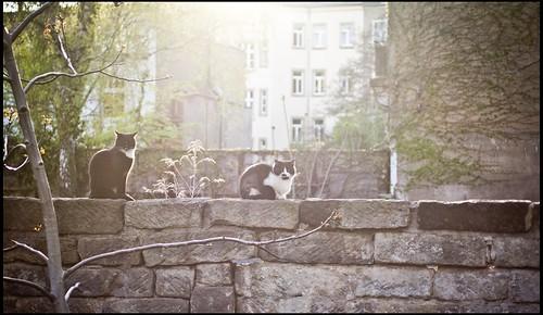 Neustadtkatzentreff
