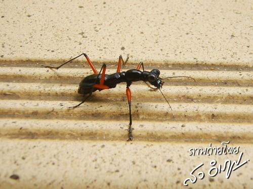 แมลงประหลาด วัดเขาสุกิม