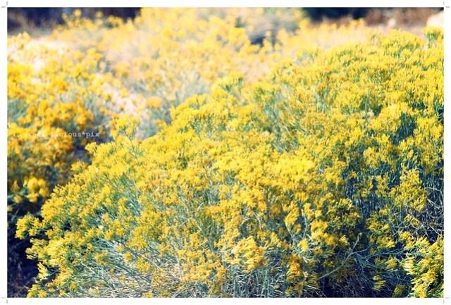 mellow_yellow