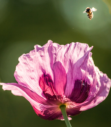 Bee and Poppy 2