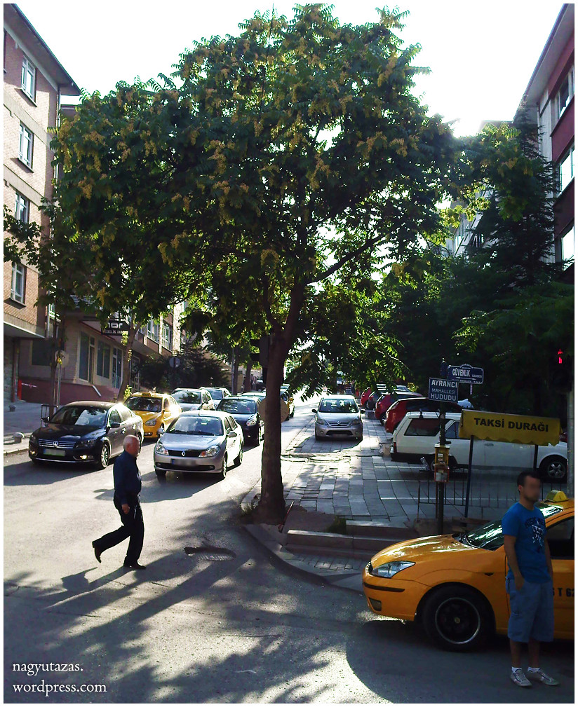 Augusztusi pillanatképek Ankarából 29