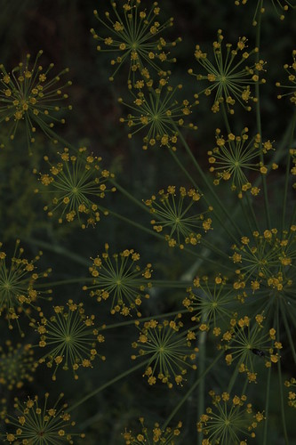 Dill constellations