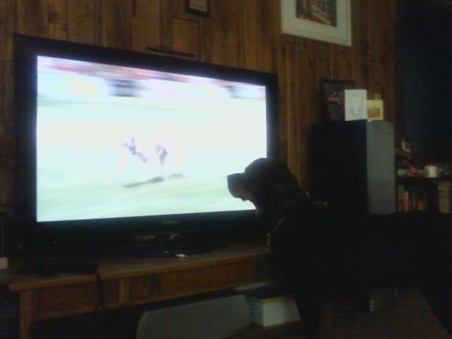 Lexy watching Incredible Dog Challenge