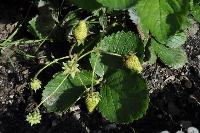 2012-08-19 garden 06