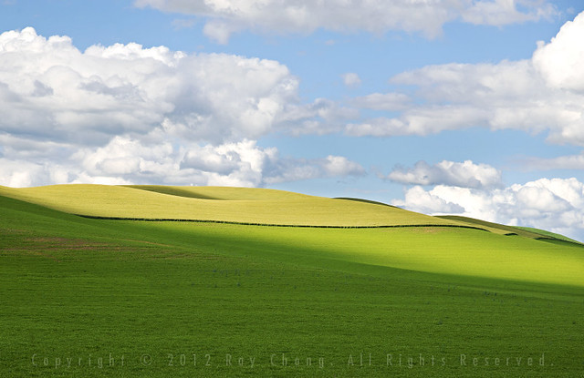 Wheat Fields, The Palouse, 2012