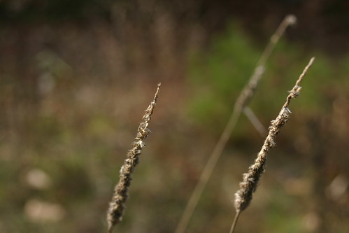 Reeds wait