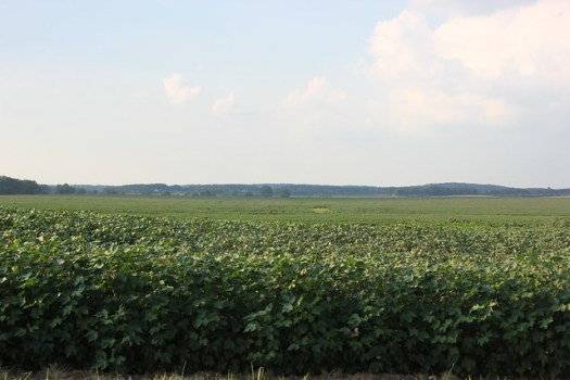 Cotton, Tennessee