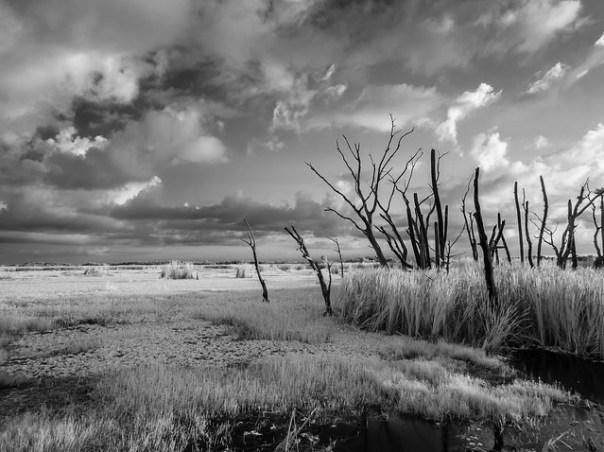 Swampy dawn